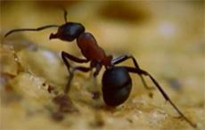 nombre pattes fourmi